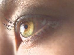 きれいな目.jpg